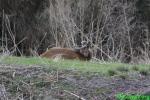 Deer lick_new