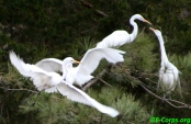 Egret Argument_new